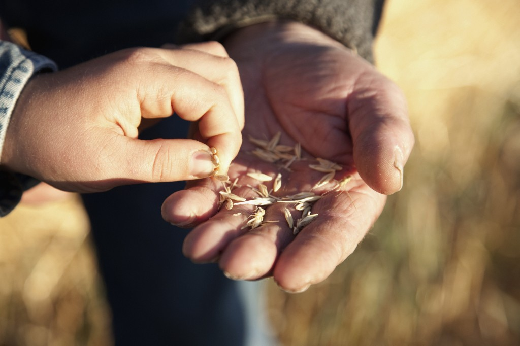 Boy picking seed from grandfather's hand